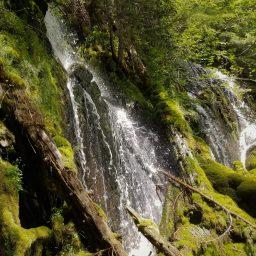 Overland Wellness natural medicine naturopathic Bozeman Montana
